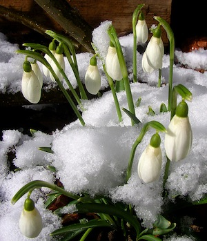 Flowers snow