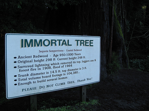 Immortal Tree (CC BY 2.0) by Brenna