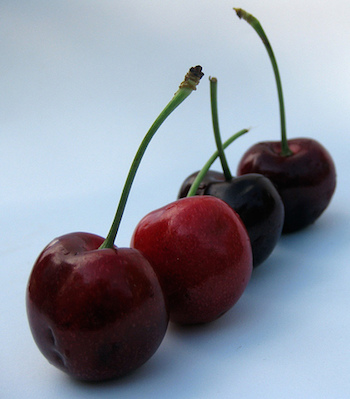 """""""He who likes cherries soon learns to climb"""" (CC BY 2.0) by Kate Ter Haar"""