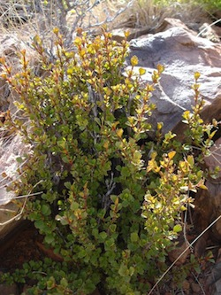 Resurrection Plants How Do These Plants Come Back To