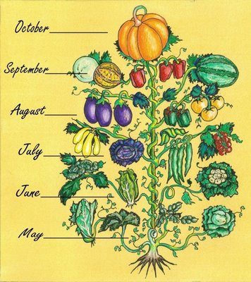 Animal, Vegetable, Miracle - Vegetannual.jpg